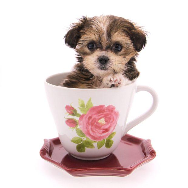 Abby-teacup2-1024x1024